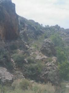 Cabra montés en Sierra de Lújar - Órgiva