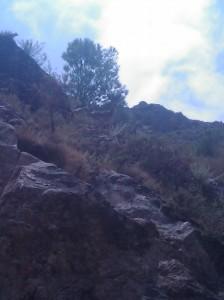 Montés en la sierra de Órgiva