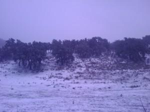 Estampa nevada en Haza del Lino