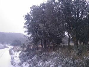 Chaparros nevados
